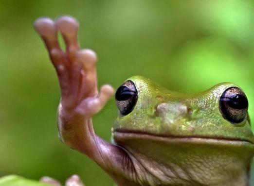 Що робить жаба?