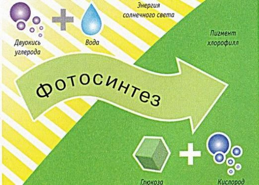 Що таке фотосинтез?