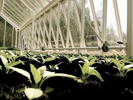 Що вигідно вирощувати?