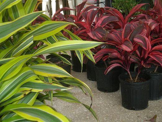 Для чого потрібні рослини?