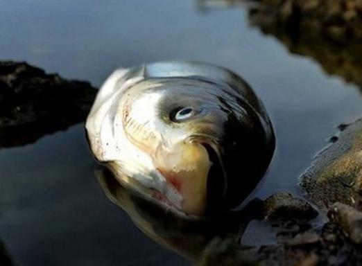 До чого сниться мертва риба?