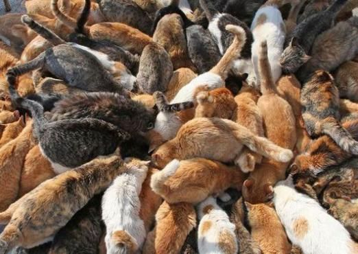 До чого сниться багато кішок?