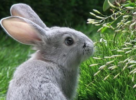 До чого сниться заєць?