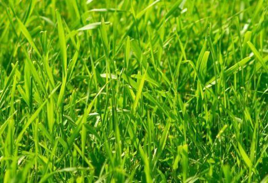 До чого сниться зелена трава?