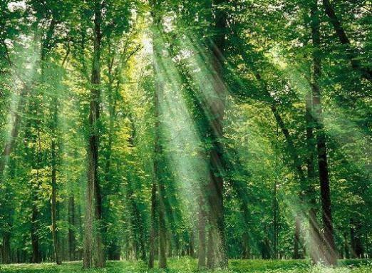 До чого сниться зелений?