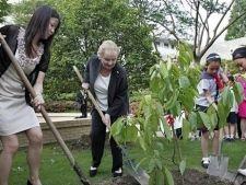 Як посадити дерево