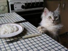 Як правильно підібрати корм для кішки