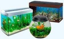 Як правильно вибрати акваріум