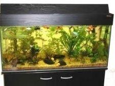 Як правильно вибрати оснащення для акваріума
