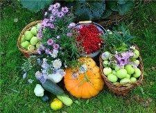 Як збирати плоди в саду восени