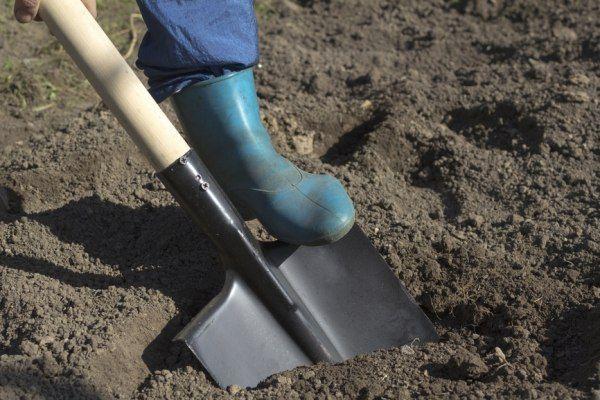 звичайна лопата