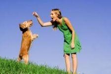 Як вибрати дресирувальника для собаки