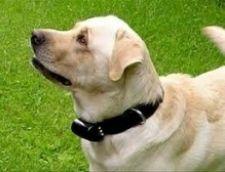 Як вибрати нашийник для собаки