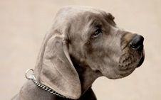 Як вибрати повідець і нашийник для собаки