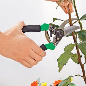 Як вибрати садові секатори