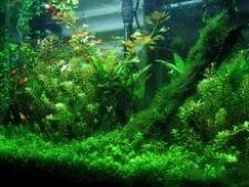 Як вибрати водорості для акваріума
