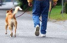 Як вигулювати собаку