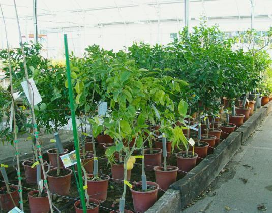Як вирощують дерева?