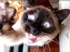 Як «вижити» з домашньою кішкою навесні