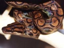 Як завести змію в домашніх умовах