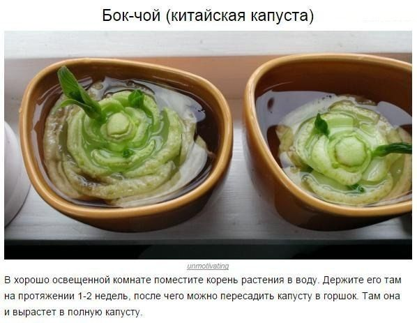 Овочі, які можна купити один раз, а потім вирощувати круглий рік