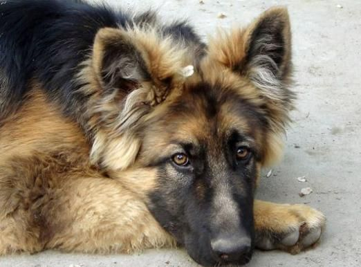 Пронос у собаки: що робити?