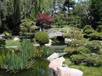 Рослини для вашого саду