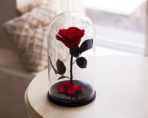 Роза в гліцерині під куполом
