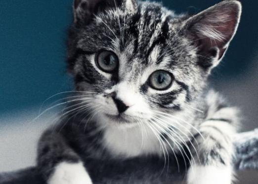 Скільки повинен важити кошеня?