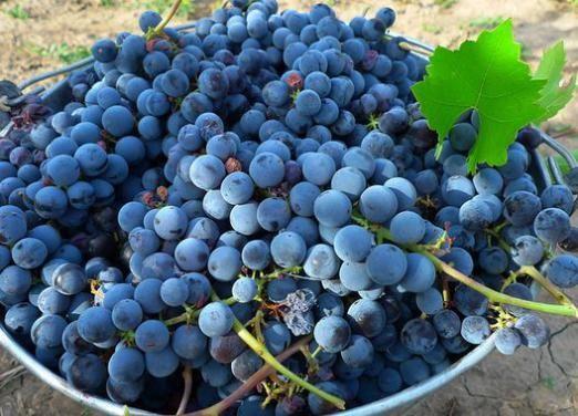 Скільки калорій у винограді?