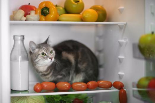 Віскас або натуралка для кішки? 10 заборонених продуктів в натуральному годуванні