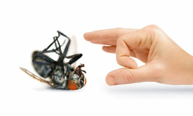 Війна з мухами в будинку: як від них позбутися?